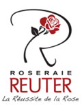 Achat rosier direct producteur